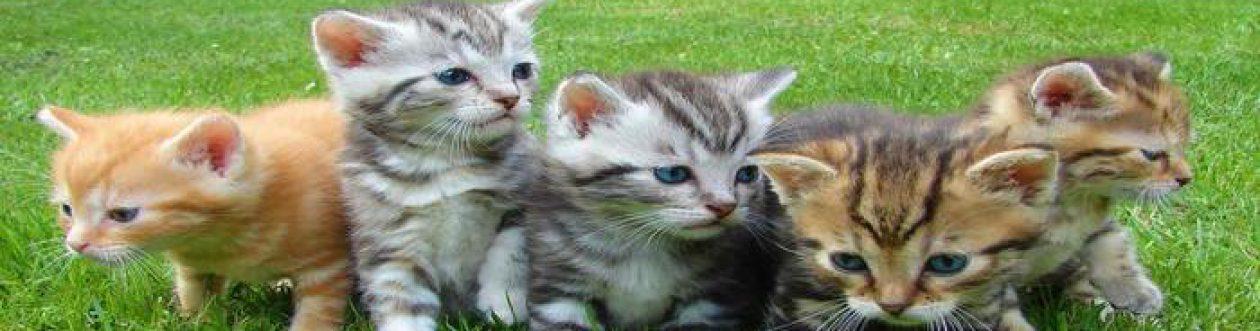 Katzenschutz Wadgassen und Umgebung e.V.